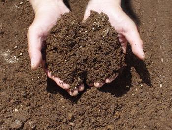 土用の禁忌-土いじり